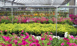 Order delivery or pick-ups here at Scenic View Gardenhouse in Rushville, NY